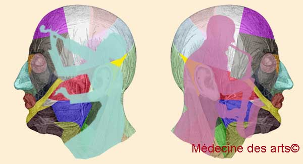 Âge du cerveau du musicien