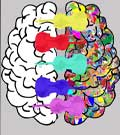 Musique et connectivité cérébrale
